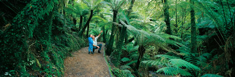 Forest bathing in an urban forest, bio philic city, Wellington, NZ